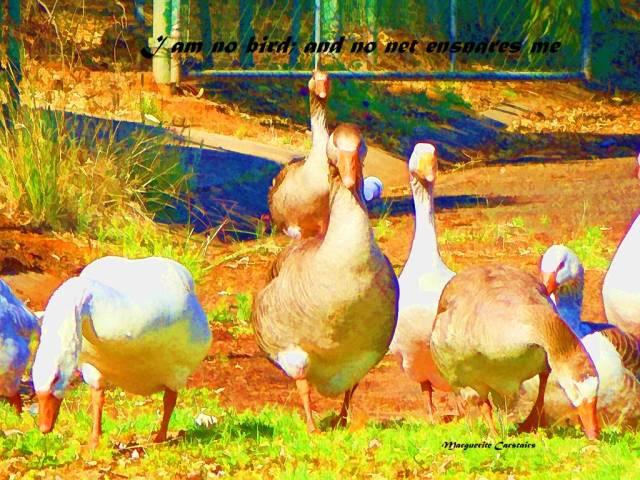 I am no bird and no net enslaves me