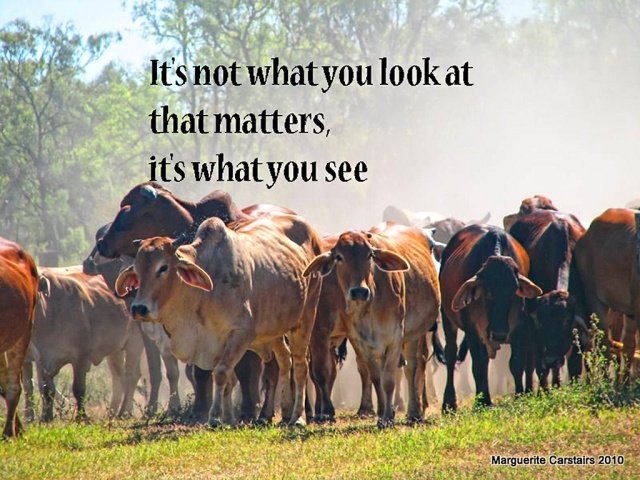 It's not what you look at that matters, it's what you see