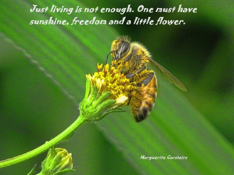 Just living is not enough. One must have sunshine, freedom and a little flower. Hans Christian Anderson