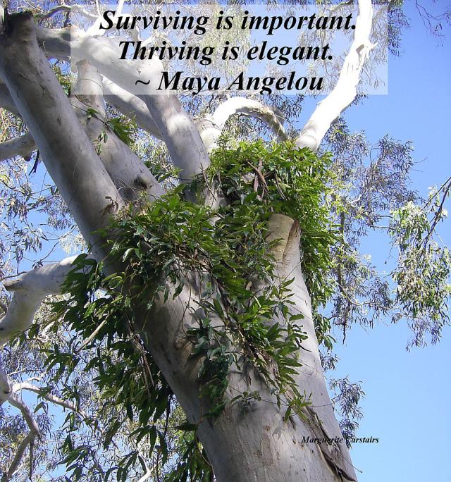 Surviving is important. Thriving is elegant