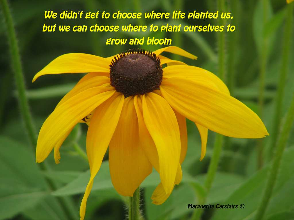 We Can Choose Where To Plant Ourselves To Grow And Bloom Quotes