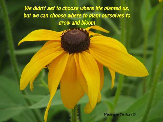 We didn't get to choose where life planted us, but we can choose where to plant ourselves to grow and bloom