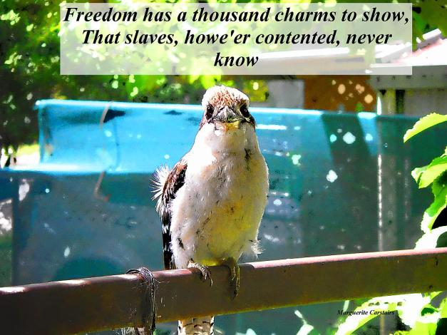 Freedom has a thousand charms to show,