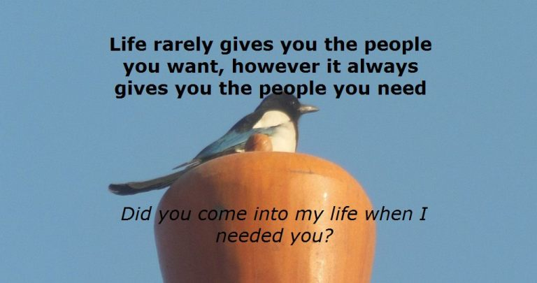 Life rarely gives you the people you want, however it always gives you the people you need
