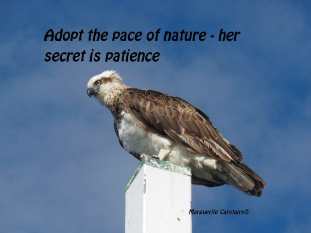 Adopt the pace of nature - her secret is patience