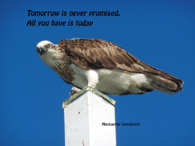 Tomorrow is never promised.