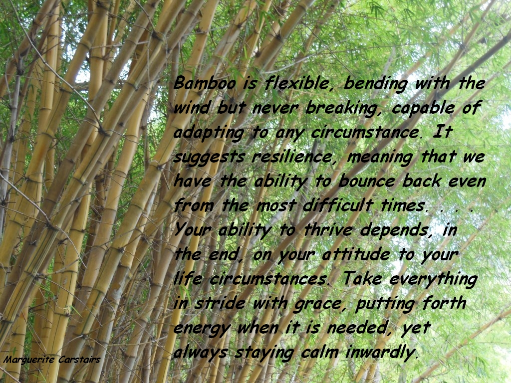 Bamboo Is Flexible Quotes Inspire Motivate Amuse