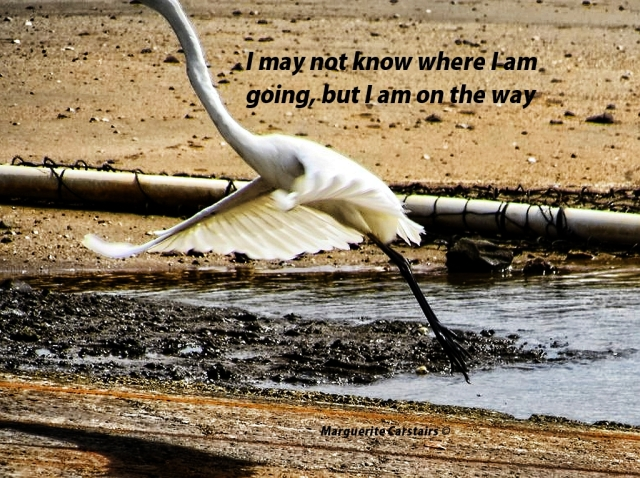 I may not know where I am going, but I am on the way
