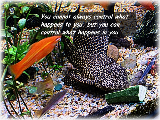 You cannot always control what happens to you, but you can control what happens in you