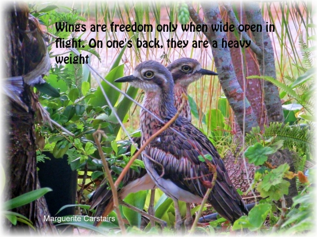 wings-are-freedom-only-when-wide-open-in-flight